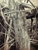 Sticks (flowerweaver) Tags: wood flooddebris sculptural riverside river cracks holes decay nature natural broken torn