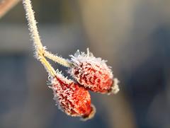 Frozen structure / Gefrorene Struktur