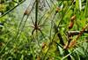 Bébé abord (Les amis des insectes) Tags: animal arachnide nature hexapode extérieur macro profondeurdechamp