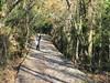 Italy - Liguria - Near Ruta - Walking along path to Pietre Strette (JulesFoto) Tags: italy centrallondonoutdoorgroup clog ligure ruta walking