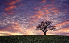Sky Glory (Captain Nikon) Tags: lonesometree alone silhouette winter derbyshire melbourne nikond7100 sigma1835mmf18 srbndgrad06