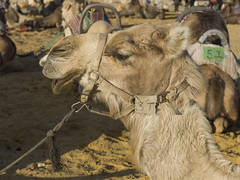 Kfar Hanokdim (Keith Levit) Tags: bedouin israel judeandesert kanaimvalley kfarhanokdim ezorbeersheva southdistrict il