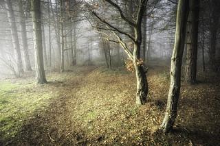 Cranwell Woods