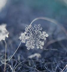 One of a kind (tpaddison1) Tags: macro snowflake challengemyself winter explore amazingworld lovenature homemadediymethod awe wonderment hiddenworld microscopic canon naturelove