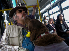Full Service Dog (prima seadiva) Tags: bus dog people person servicedog