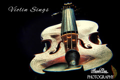 Violin Sings (Mambo'Dan) Tags: stillphotography violin closeup musicinstrument