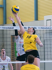 170211_VBTD1-Toggenburg_084.jpg (HESCphoto) Tags: volleyball vbtherwil volleytoggenburg damen nlb 99ersporthalle therwil saison1617