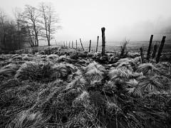 Clôture dans un coin du Sancy. (steph20_2) Tags: panasonic gh3 m43 714 lumix monochrome monochrom campagne countryside sancy puydedôme montagne mountain noir noiretblanc ngc blanc black bw white skanchelli clôture