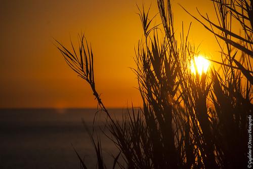 Levar del sole