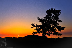 Artsy take on the Bonsai tree at Sunset (Singing With Light) Tags: tree sunrise photography spring sony ct 18th april milford woodmont 2015 mirrorless woodmontbeach anchorbeach singingwithlight singingwithlightphotography alpha6000 sonya6000
