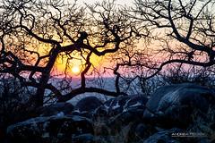 4x4 ZAMBESI_188_0815@ANDREAFEDERICI.jpg (Andrea Federici) Tags: makgadikgadipan travel africa alba andreafedericiphoto botswana laghisalatidimakgadikgadi sunrise zambesi ng2015 makgadikgadi pan african landscape safari park national lekhubu open nature island sua desert baobab space sky camping summer environment arid dry kalahari salt savanna wilderness mammal sun animal sunshine tree namibia zebra outdoor dusk barren contrast rocks rock blue sowa daytime tranquil