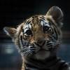 Bengal Tiger Cub (Sandra Wildeman) Tags: zoo nikon 70300mm tierpark tijger tigre dierentuin dierenpark bengaltiger olmensezoo pantheratigristigris bengaalsetijger katachtigen tigredebengale royalbengaltiger d5300 indischertiger tijgerwelpjes