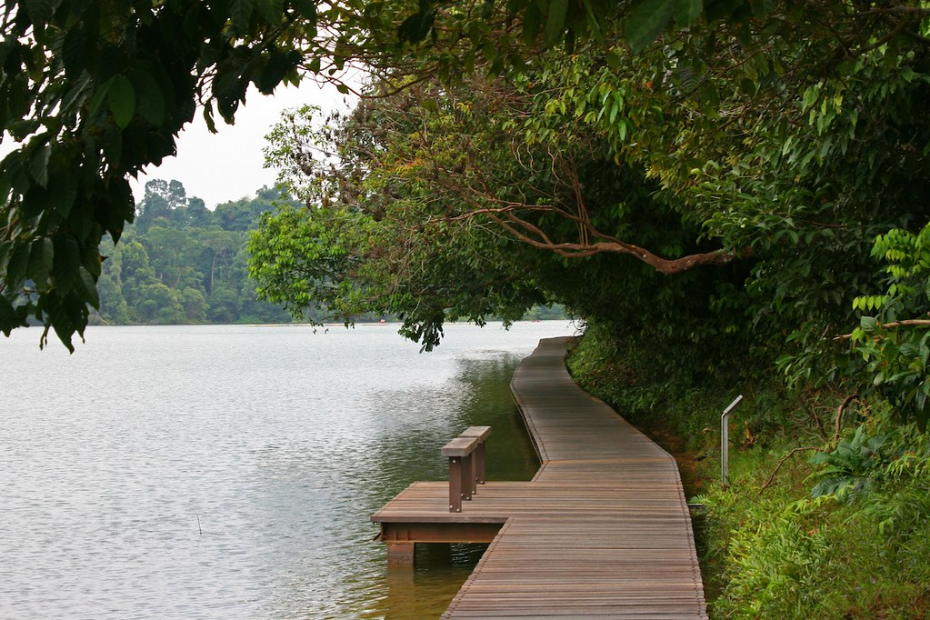 MacRitchie-reservoir