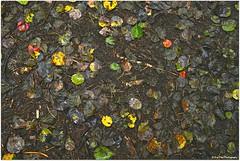 herbstlicher Waldboden (mayflower31) Tags: autumn leaves forest herbst wald bltter