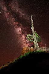 Terra Firma (reflectioninapool) Tags: longexposure red sky lightpainting color tree green nature rock vertical stone pine night dark stars landscape outdoors utah bare branches creative nobody astrophotography astronomy brycecanyon milkyway