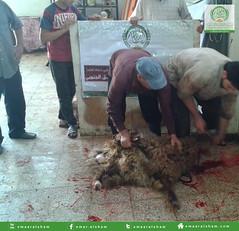 2 (emaar_alsham) Tags: eid korban emaar         emaaralsham