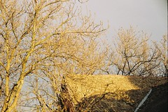 (....) Tags: autumn trees roof house film 35mm branches analogue goldenhour yashicaelectro35gt