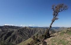 Alone in the Blue (Tones Corner) Tags: blue sky tree landscape marlborough nzscene