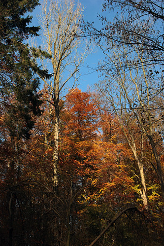 """Herbstwaldspaziergang (05) • <a style=""""font-size:0.8em;"""" href=""""http://www.flickr.com/photos/69570948@N04/22484528049/"""" target=""""_blank"""">View on Flickr</a>"""