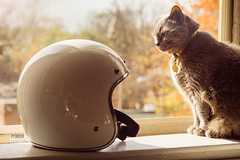 #CatBro (TheRobbStory) Tags: morning autumn color fall window digital cat dc washington beans feline ambientlight sunday helmet 100mm motorcycle canon100mmf2 2 vsco sonya7 bell500 vscofilm robbhohmann catbro