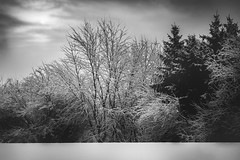 The Grey (Zouhair Lhaloui) Tags: trees winter blackandwhite white snow nature clouds forest landscape illinois nikon midwest cloudy sale hiver fineart monochrom hdr greyscale noireetblanc 2015 printsale harshweather nikond7000 zouhairlhaloui