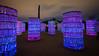EOS-M_IMG_2257a-4x6x300dpi (ddrg) Tags: luminaria desertbotanicalgarden dbg canonefm1122mmf456isstm canoneosm1