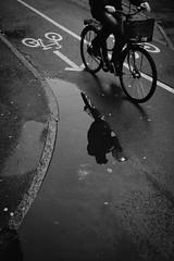 Cycling after rain. (Panagiotis Vyrinis) Tags: 2016 blackandwhite bnw cafe bw candid city cityscape contact cobbelstone day expression gatufoto gothenburg göteborg monoart monochrome noir december outdoor panagiotis vyrinis people rawstreet road sidewalk staring street streetphotography sweden sverige fujifilm fuji xpro2 fujinon xf23mmf2rwr bicycle reflection man riding ride rain water arrow