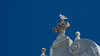 Above all (andbog) Tags: sony alpha ilce a6000 sonya6000 emount mirrorless csc sonya oss sel sonyα sonyalpha sony⍺6000 sonyilce6000 sonyalpha6000 ⍺6000 ilce6000 italia italy puglia apulia salento le minimalist minimalista summer estate widescreen 55210mm sel55210 blue blu sky cielo clear seagull gabbiano wildlife animali bird natura nature gallipoli apsc 169 16x9 cross croce chiesadisantamariadegliangeli chiesa church