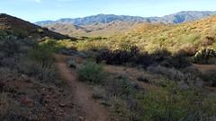20161210_085936 (Ryan/PHX) Tags: trailrunning bct blackcanyontrail arizona desert outdoors ultrarunning aravaiparunning