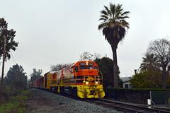 Tropical Dunnigan (caltrain927) Tags: california northern railroad genesee wyoming shortline extra freight train local emd gp151 ex cnw sp west valley sub line dunnigan ca