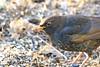 up close J78A0201 (M0JRA) Tags: rspb oldmoor birds lakes woods walks trees ponds fields grass hedges foot paths