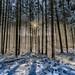 Winter im Wald - Winter in the forest (ulibrox) Tags: gegenlichtaufnahmen ilce6300 deutschland sony sel1018 colorefexpro pfaffenhofenanderglonn bayern brugger sonya6300 sonysel1018 bavaria germany wald outdoor