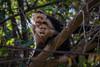 Expression (hey its k) Tags: costarica guanacasteprovince cr img9790 canon6d tamron 150600mm nature wildlife capuchin monkey whitefacedmonkey monkeys