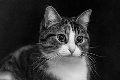 Pallina 1408 (Federico Basile FB Photo Images) Tags: gatto gatta gattina gattino gattini animale felino pallina cucciolo cucciola azione verde neve salto coccole fusa giochi cat smallcat cats cute sweet sweetcat