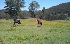 1 Yengo Drive, Putty NSW