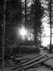 Let the sunshine in (jondewi52) Tags: black forest nature outdoors white wood woods tree trees sun sunrise outdoor blackandwhite monochrome