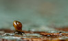 Minute mollusc (markhortonphotography) Tags: deepcut surrey macro markhortonphotography nature surreyheath wildlife mollusc invertebrate thatmacroguy snail