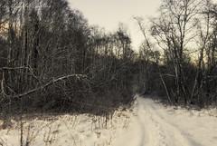 forest path (Lyutik966) Tags: forest tree nature winter snow path branch russia krasnogorsk sunrise