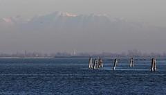 Dominanti (lincerosso) Tags: lagunanorddivenezia liopiccolo valleolivara orizzonti dominanticromatiche inverno luce blu azzurro bellezza armonia