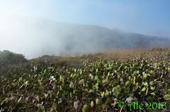 Fog on Catalina Island (Ale*) Tags: catalina santacatalina catalinaisland channelislands losangelescounty losangeles california southerncalifornia fog clouds cactus opuntia pacificocean landscape ale