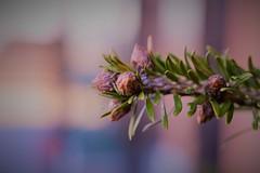 TREE (andreea_loredana) Tags: macro nature colors objects tree green light andreealoredanamihailiuc flickr nikon