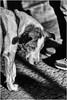 Sad Doggy (Armin Fuchs) Tags: arminfuchs dog sad