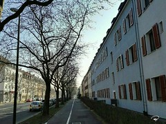NIEDERWERRNER STRAßE #Schweinfurt #street #city #avenue #cityscape #trees #pavement #Photographie #photography (benicturesblackwhite) Tags: street avenue city photography cityscape pavement schweinfurt photographie trees