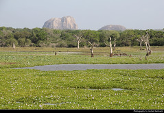 Yala NP, Sri Lanka (JH_1982) Tags: landscape scenery scenic trees tree swamp lake mountain yala ruhuna np national park nationalpark parque nacional parc parco nazionale 雅拉國家公園 ヤーラ国立公園 яла национальный парк nature sri lanka ශ්රී ලංකා இலங்கை 斯里蘭卡 スリランカ 스리랑카 шриланка سريلانكا श्रीलंका ประเทศศรีลังกา