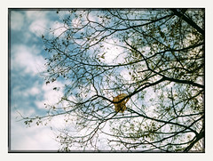 bagfruit tree (chickentender™ (Eyewanders Foto)) Tags: 120format fujichrome october2016 provia100f rdpiii believeinfilm buyfilmnotmegapixels eyewandersfoto filmisalive fuji fujifilm ishootfilm mediumformat pentax645nii positivefilm slidefilm slides takumar105mmf24 wandersoffalot fotodioxadapter 67to645adapted 645nii