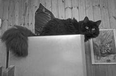 Favorite place of Vas'ka (Caulker) Tags: kitchen fridge cat vaska