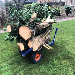 "Stein arbtrolley making it easy to move the timber out of this garden today #wardenstreecare #treecare <a style=""margin-left:10px; font-size:0.8em;"" href=""http://www.flickr.com/photos/137723818@N08/32541327651/"" target=""_blank"">@flickr</a>"