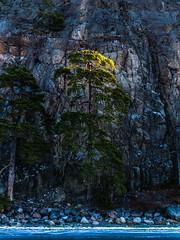 Sol på toppen (David Thyberg) Tags: 2017 baggensfjärden ice nature saltsjöbaden stockholm stockholmarchipelago sverige sweden winter långfärdsskridsko skate skating