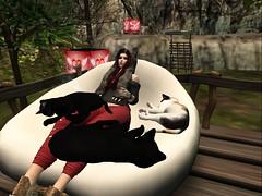 Catitude1 (ღĄηϊʈα ωalkerღ) Tags: cat kitten kitty meow crazy lady friends hanging out random second life secondlife sl snapshot screenshot