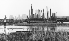 Abandoned Pennsylvania Railroad ferry piers by the Morris Canal Small Basin on the right. Today, this is the field where the Colgate Clock stands. Lower Manhattan and the World Trade Center across the Hudson in a different world. Jersey City. March 1977 (wavz13) Tags: oldphotographs oldphotos 1970sphotographs 1970sphotos oldphotography 1970sphotography vintagephotographs vintagephotos vintagephotography filmphotos filmphotography vintagenewyorkphotography vintagenewyorkphotographs vintagenewyorkphotos oldworldtradecenter vintageworldtradecenter twintowers originalworldtradecenter depressing bleak noir noire dark oldbuildings vintagebuildings abandonedbuildings jerseycityphotographs jerseycityphotos oldjerseycityphotography oldjerseycityphotos oldjerseycity vintagejerseycity vintagejerseycityphotography jerseycityhistory urbanphotography urbanphotos urbanscenes cityphotography cityphotos newjerseyphotographs newjerseyphotos oldnewjersey vintagenewjersey newjerseyhistory gloomy urban industrialjerseycity industrialruins urbanwasteland urbandecay urbanexploration abaondoned manhattanskyline newyorkskyline newyorkskyscapers 1970smanhattan 1970snewyork oldnewyork vintagemanhattan oldmanhattan hudsonriver swampy swamp tidalmarsh